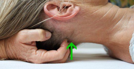 Viscerocranium – Gesichtsschädelarbeit